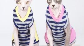 4K Kittens Sphynx Photo Download