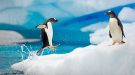 4K Penguins Best Wallpaper