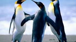 4K Penguins Desktop Wallpaper