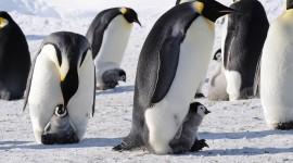 4K Penguins Desktop Wallpaper For PC