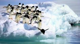 4K Penguins Desktop Wallpaper HD