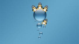 4K Penguins Image Download