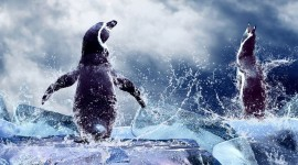 4K Penguins Photo