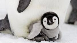 4K Penguins Photo Download