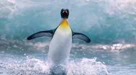 4K Penguins Photo Free