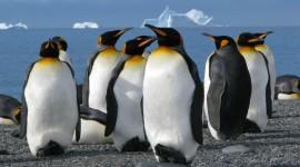 4K Penguins Photo Free#1