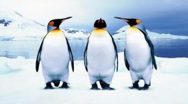 4K Penguins Photo Free#2