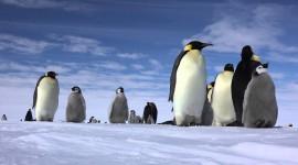 4K Penguins Wallpaper 1080p