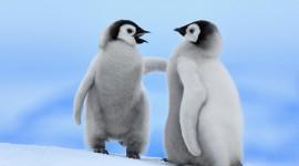 4K Penguins Wallpaper