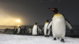 4K Penguins Wallpaper Download Free