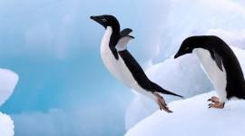 4K Penguins Wallpaper For Desktop