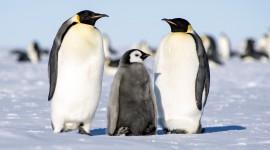 4K Penguins Wallpaper Free