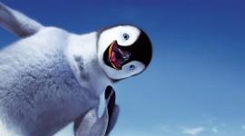4K Penguins Wallpaper Full HD
