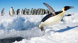 4K Penguins Wallpaper Gallery