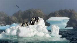 4K Penguins Wallpaper HQ