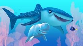 4K Shark Image