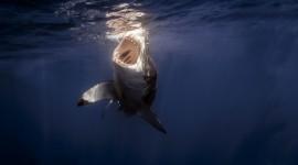 4K Shark Photo