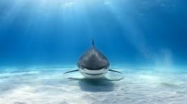 4K Shark Photo Free