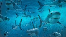 4K Shark Photo Free#2