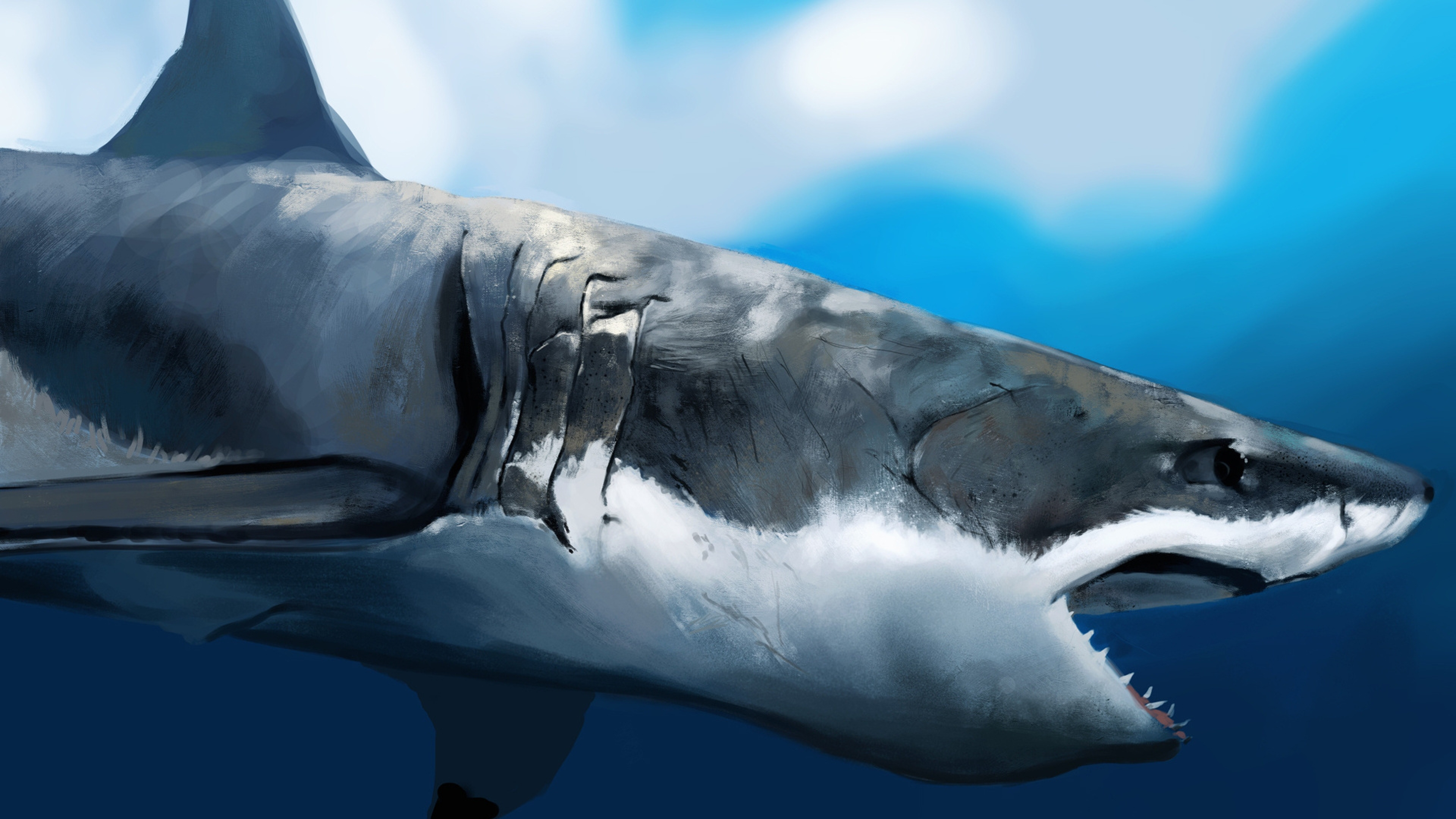 4K Shark Wallpapers High Quality | Download Free
