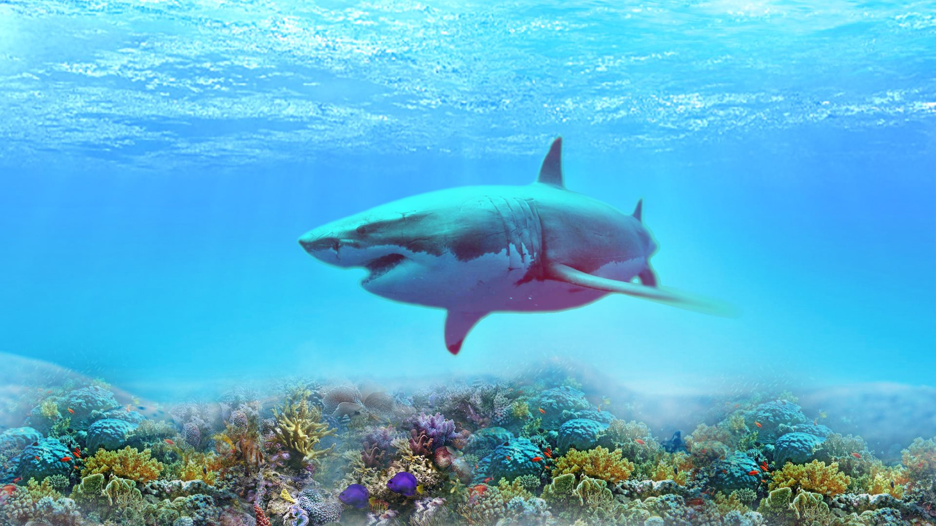 4k shark wallpapers high quality download free