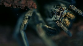 4K Spiders Photo