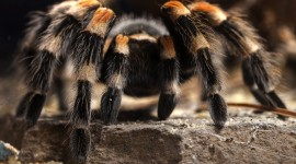 4K Spiders Photo Free
