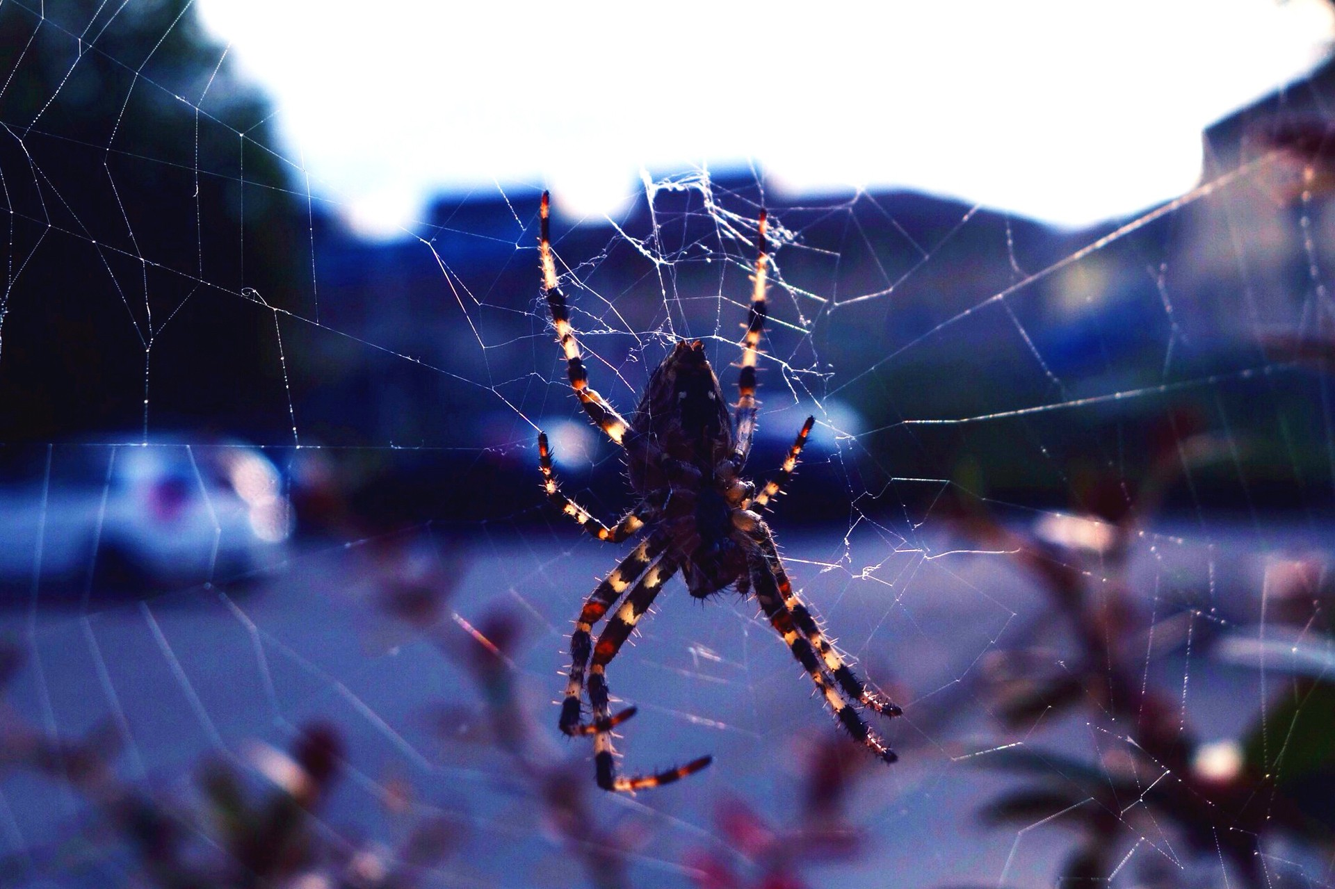4k spiders wallpapers high quality download free - 4k wallpaper download ...