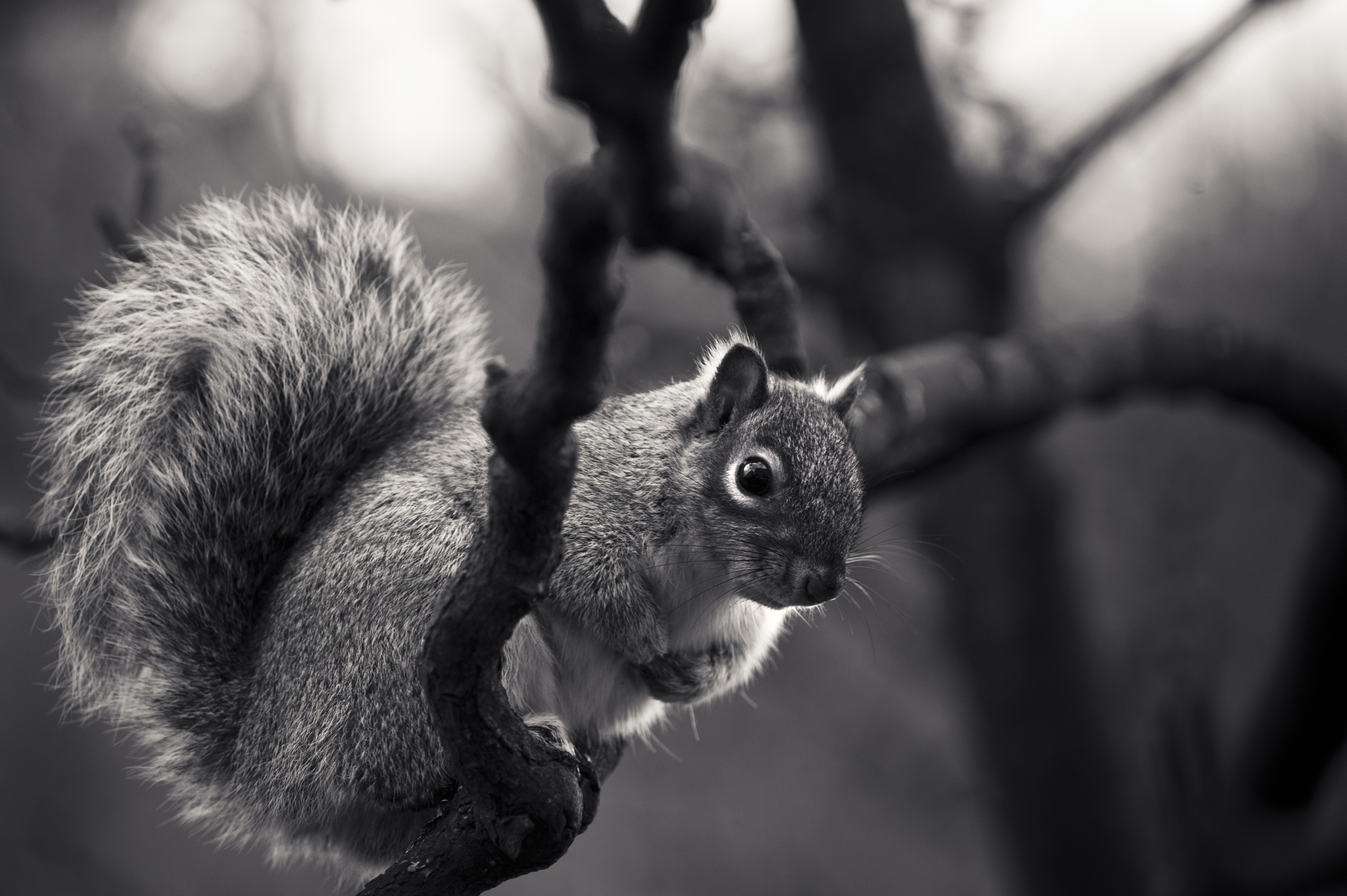 Black And White Animals Wallpapers High Quality