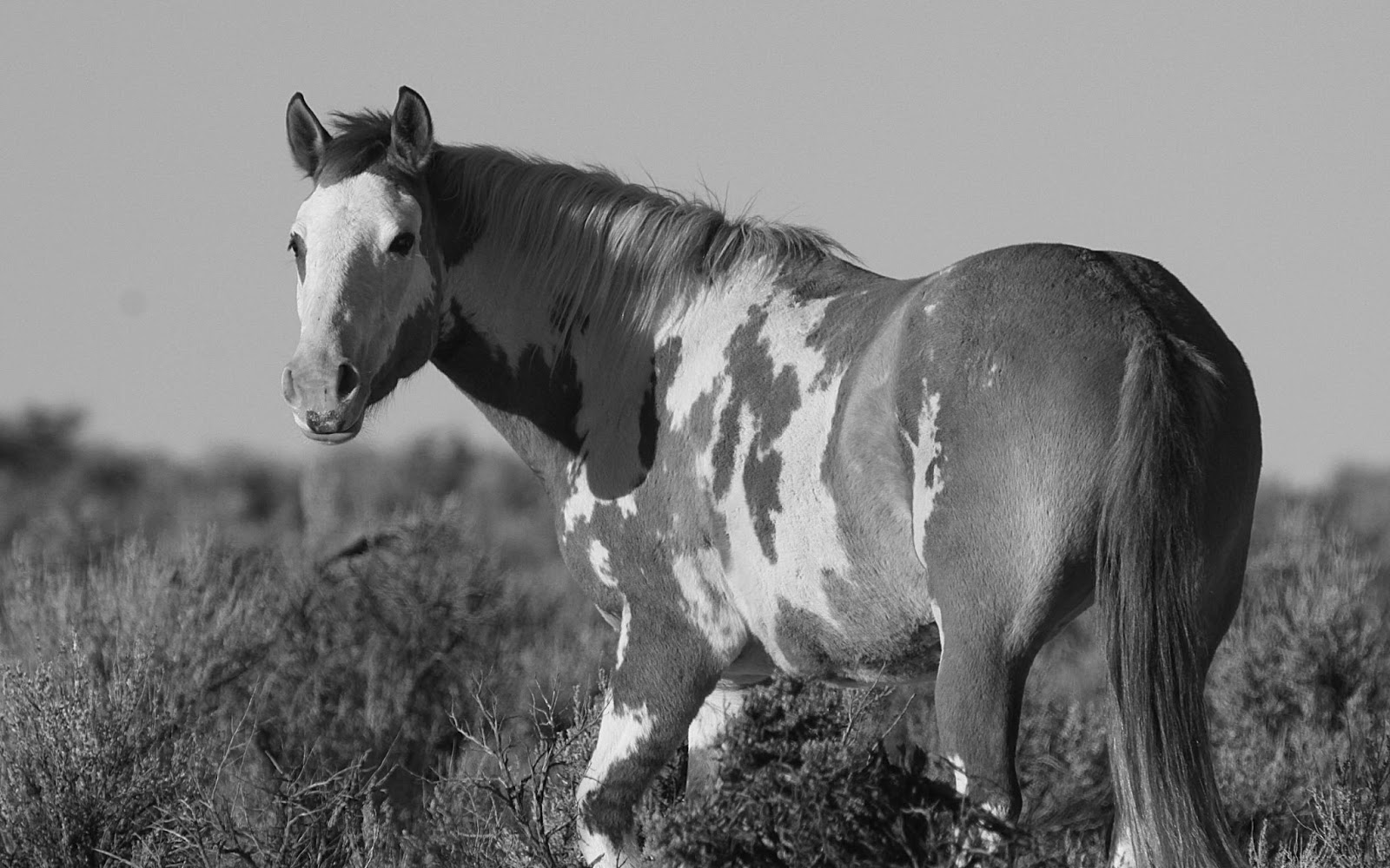 Black And White Animals Wallpapers High Quality | Download ...