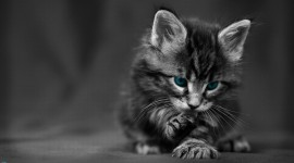 Black And White Animals Wallpaper 1080p #2