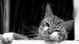 Black And White Animals Wallpaper 1080p#1