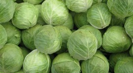 Cabbage Wallpaper 1080p