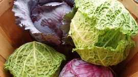 Cabbage Wallpaper For PC