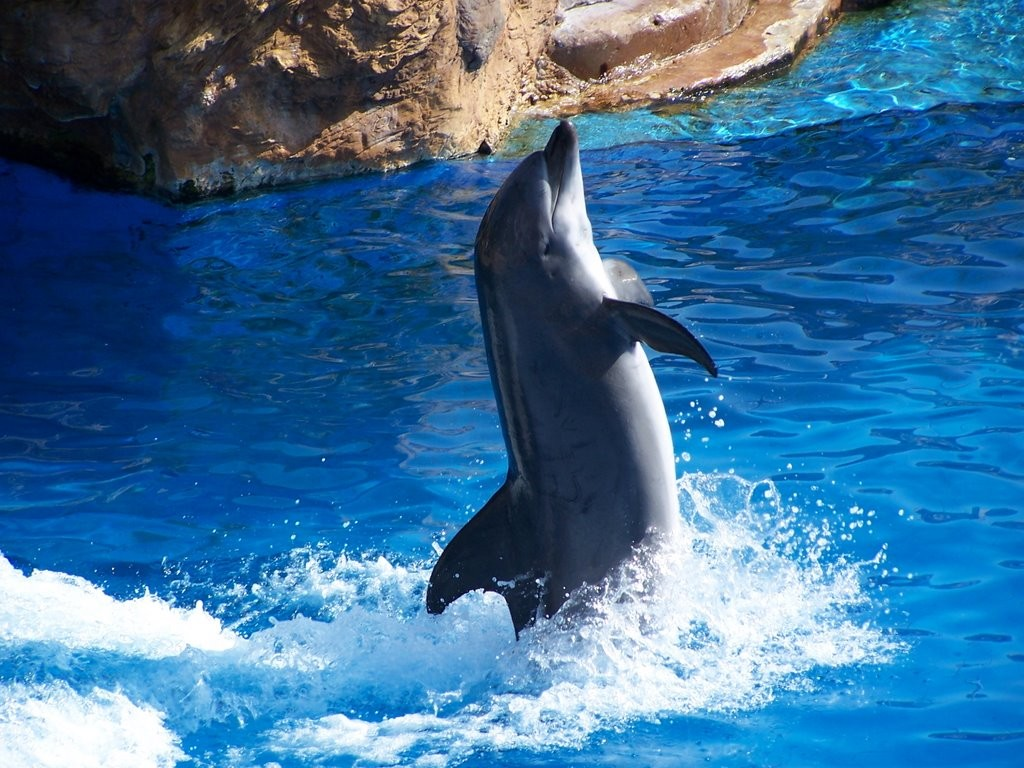 Dance Of The Dolphins wallpapers HD