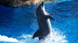 Dance Of The Dolphins Best Wallpaper