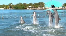 Dance Of The Dolphins Desktop Wallpaper