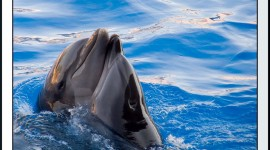 Dance Of The Dolphins Image Download