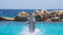 Dance Of The Dolphins Photo Download