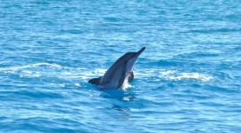 Dance Of The Dolphins Photo#2
