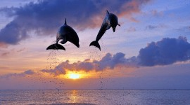 Dolphins At Sunset Best Wallpaper