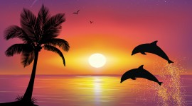 Dolphins At Sunset Desktop Wallpaper