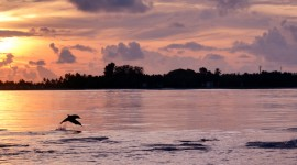 Dolphins At Sunset Photo Download