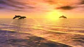 Dolphins At Sunset Photo Free