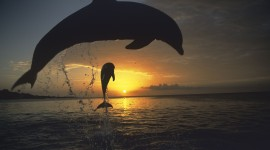 Dolphins At Sunset Wallpaper