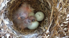Eggs Of Birds Wallpaper For IPhone