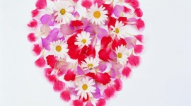 Heart Of Flowers Wallpaper