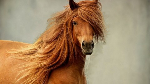 Horse Mane wallpapers high quality