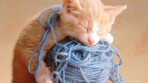Kittens And Yarn wallpapers high quality