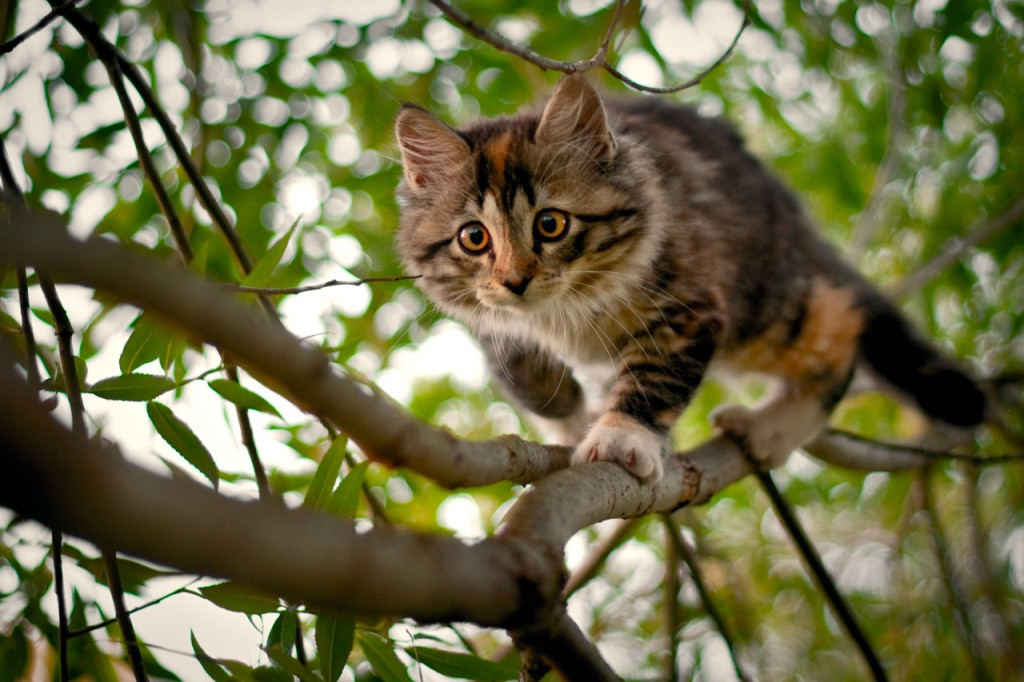 Kittens In Trees wallpapers HD